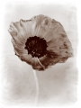 Poppy remembered
