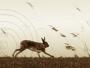 Irish Hare Running (Full Frame)