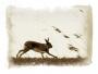 Irish Hare Running