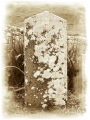 Young Finlay, only son, died 22nd January 1898 aged 20. 'With Christ which is far better.'