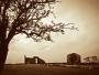 Nendrum monastic site and thorn tree