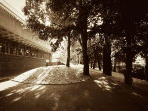 VCB-gym-trees